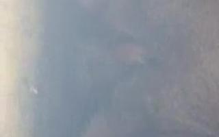 Eine reife Frau mit Megaschwanz - Eine geile Fickshow 563